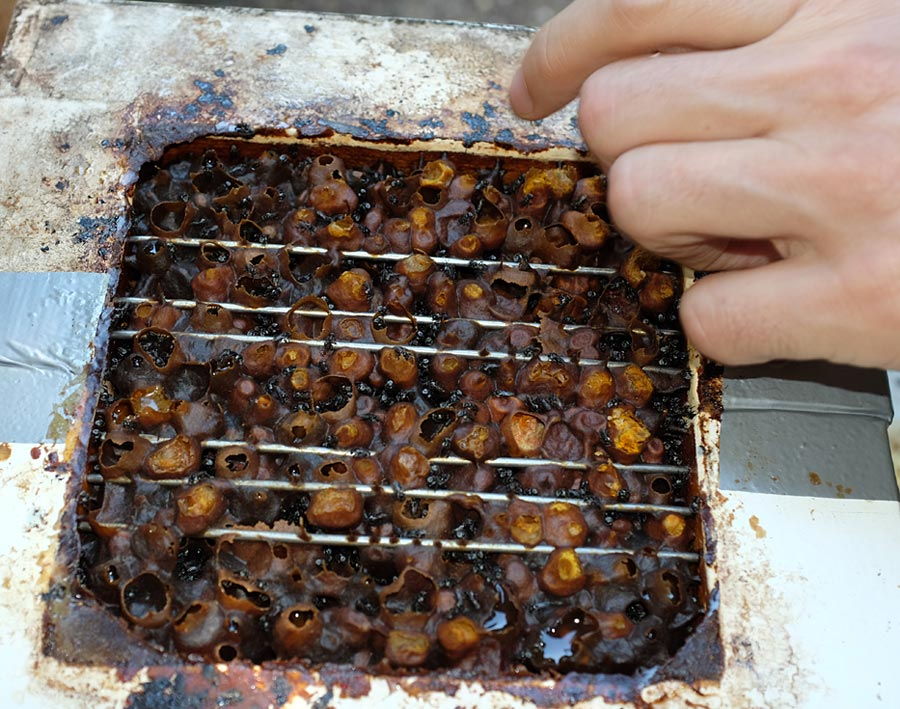 Stingless Bees Honey Converter