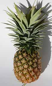 Pineapple raw fruit and extra sweet flavour