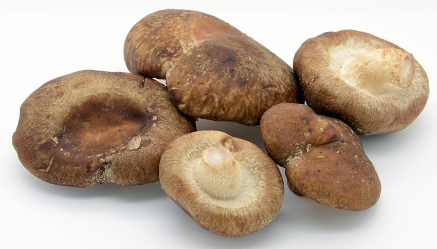 Convert Amounts Of Mushrooms  Shiitake  Medicinal