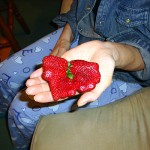 Photo of a distorted strawberry.