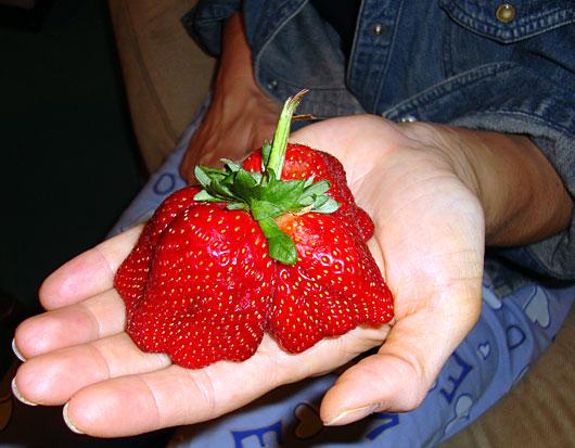 Distorted Strawberry
